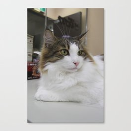 The Cat from the Cafe Canvas Print