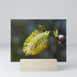 Pussy Willow Flower Mini Art Print