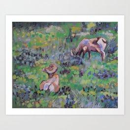 BigHorn Sheep, Yellowstone National Park Art Print