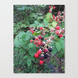 SHINY WILD BLACKBERRIES  (2 of 2) Canvas Print