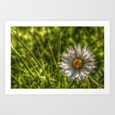 Solitaire Daisy 15 Art Print
