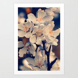Almond bloom(3) Art Print