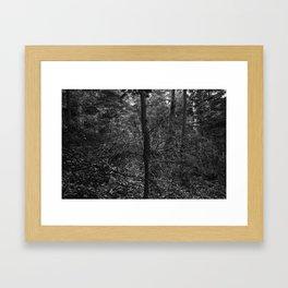 VValk in the VVoods Framed Art Print