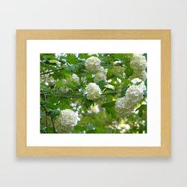 Hydrangea in Spring Framed Art Print