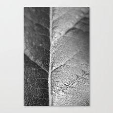 Macro flower 3 Canvas Print