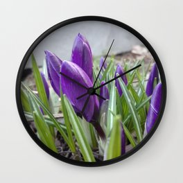 buds of crocuses Wall Clock
