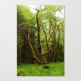 A Moos Laden Tree Canvas Print