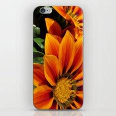 Gazania iPhone & iPod Skin