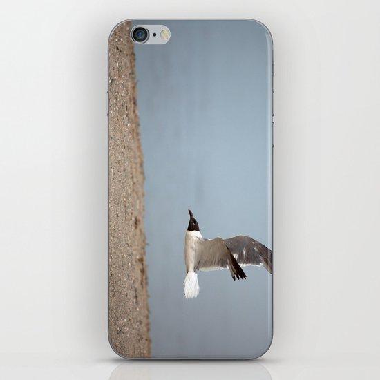 Laughing Gull in Flight iPhone & iPod Skin