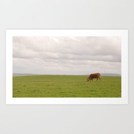 Cliffs of Moher: cow Art Print