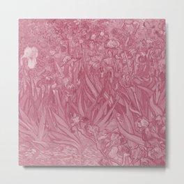 Blush pink irises Metal Print