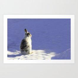 Mountain hare Art Print