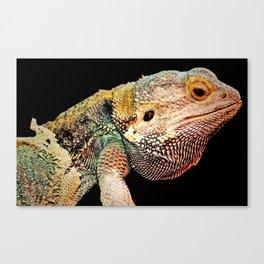 BEARDED DRAGON Canvas Print