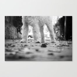Dixie (the) chick Canvas Print