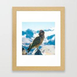 New Zealand Kea Framed Art Print