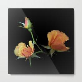 flowers on black - 3 orange rosebuds Metal Print