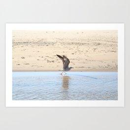 Seagull bird taking off Art Print