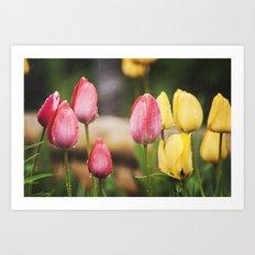 Tulip Tears Art Print