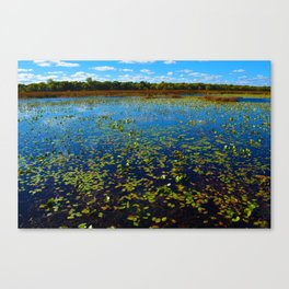 Point Pelee National Park Wetlands, ON Canada Canvas Print