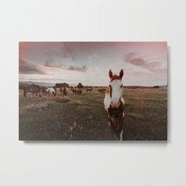 Horse in Wyoming Sunset Metal Print