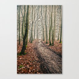snowless winter walk in the forest Canvas Print