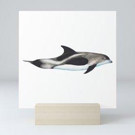 White-Beaked Dolphin Mini Art Print