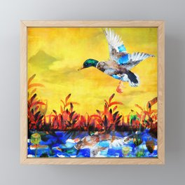Mallard Morning Framed Mini Art Print