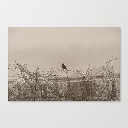 Bird On A Tree Limb In Springtime Canvas Print