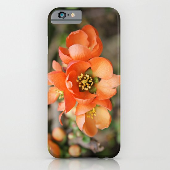 Orange Blossoms iPhone & iPod Case