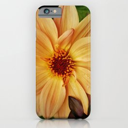 EVERYTHING IS JUST PEACHY DAHLIA FLOWER iPhone Case