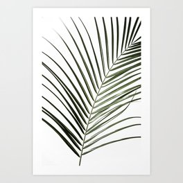 Palm Leaves 8 Art Print