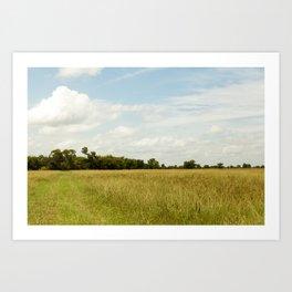 Texas Field under Blue Skies Art Print