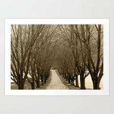Tree Lined Road Art Print