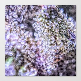 Grand Daddy Purple Forum Cut Cookies Strain Canvas Print