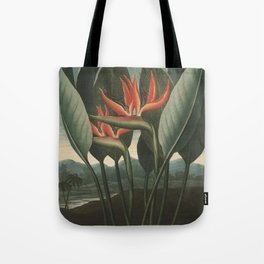 Henderson, Peter C. (d.1829) - The Temple of Flora 1807 - The Queen (Bird of Paradise Flower) Tote Bag
