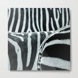zebra 2 Metal Print