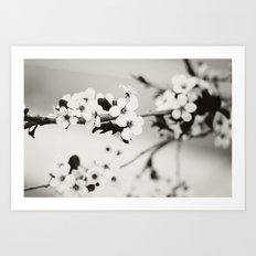 Cherry Blossoms (Black and White) Art Print