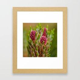 Pine Tree Flowers Framed Art Print