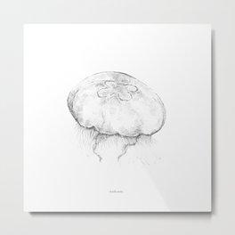 Aurelia aurita Metal Print