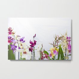 Different orchid plants on white background Metal Print