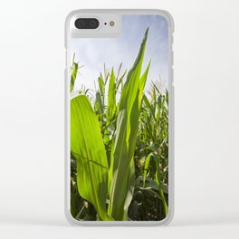 green corn Clear iPhone Case