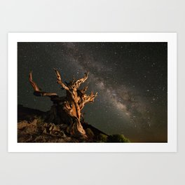 Milky Way over an Ancient Bristlecone Pine  Art Print