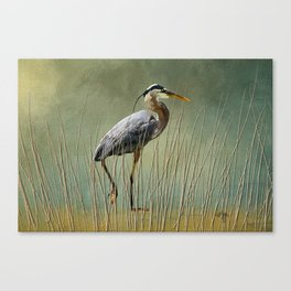 Great Blue At The Beach Canvas Print