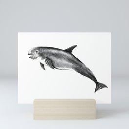 Risso's Dolphin Mini Art Print