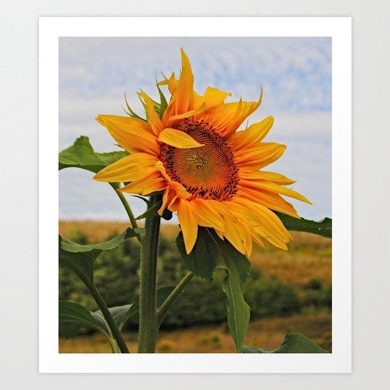 Sunrise Sunflower Art Print