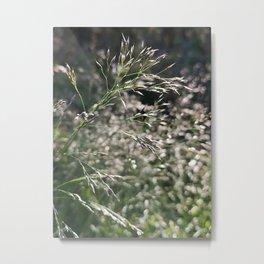 Grasses in the morning bokeh Metal Print