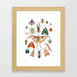 Beetles of the World Framed Art Print