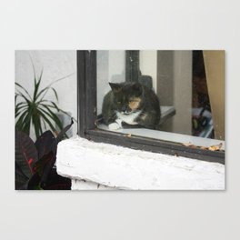 The queen of the house.  Canvas Print