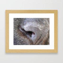nose Framed Art Print