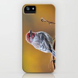 Fall Finch iPhone Case